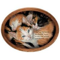 Framed Canvas Who's Who—Kittens; Framed Canvas Oval