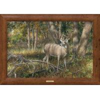 Buy cheap Framed Canvas Shadowland—Deer; Framed Gallery Canvas from wholesalers