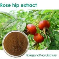 Buy cheap Rose hip powder pure and natural rose hip oil from wholesalers
