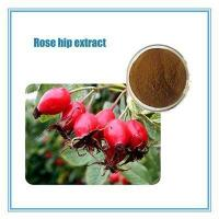 Buy cheap fructus rosae p.e. rose hip extract powder with .Flavones 1-20% & Polyphenols 5-25%(by UV) from wholesalers