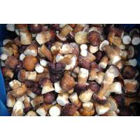 Buy cheap Frozen Boletus Edulis from wholesalers