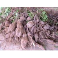 Buy cheap Kudzu root extract 98% from wholesalers