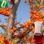 Buy cheap Schisandra oil Essential Oil from wholesalers