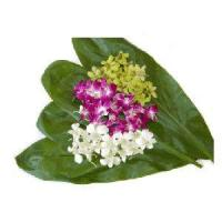 Buy cheap Loose Orchids & Tropical Flowers from wholesalers