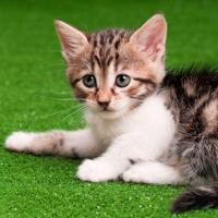 Buy cheap Pet Artificial Grass for Cats from wholesalers