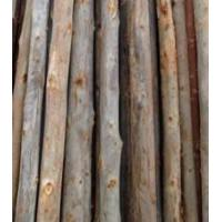 Buy cheap Eucalyptus Wood from wholesalers