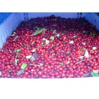 Buy cheap Frozen Organic Lingonberry from wholesalers