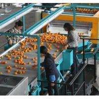 Buy cheap Orange juice processing line from wholesalers