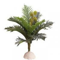 Buy cheap Table Fern/Spider Brake from wholesalers