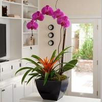 China Father'Day Exotic Orchid Garden.No.9 send gift box to australia sydney on sale
