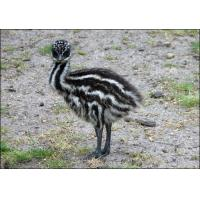 Buy cheap Emu Grower Feed product
