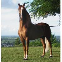 Buy cheap Horse Balancer Feed from wholesalers