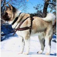 Buy cheap Akita Pulling/Tracking Leather Dog Harness-Husky harness from wholesalers