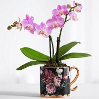 China Best Sellers Midnight Garden Orchid on sale