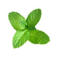 Buy cheap Spearmint Essential Oil from wholesalers
