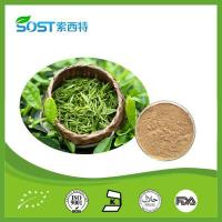 Weight-losing Product Green Tea Extract Tea Polyphenols