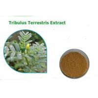 Buy cheap Tribulus Terrestris Extract Powder-hot sale from wholesalers