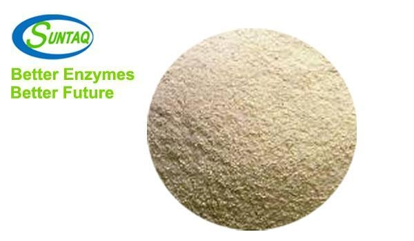 Quality Xylanase SQzyme XSP for sale