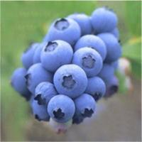 Buy cheap Herbal Extract Bilberry Extract from wholesalers