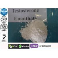 Buy cheap Powerful Test E / Testosterone Enanthate SteroidPowder For Bodybuilding Supplements from wholesalers