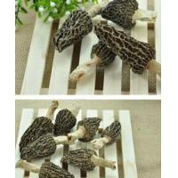 Buy cheap Dried Morel Mushroom from wholesalers