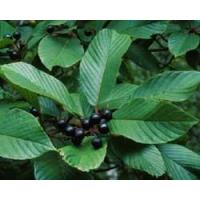 Buy cheap Woman's Healthy Cascara Sagrada Extract Model: F1048 from wholesalers
