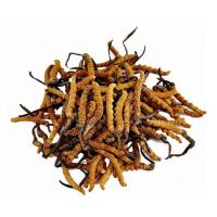 Buy cheap Anti-Oxidant Cordyceps Sinensis Extract Model: 1025 from wholesalers