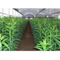 Buy cheap Portable Uv Resistant Clear Plastic Roll Film UVA Diffuse For Greenhouse product