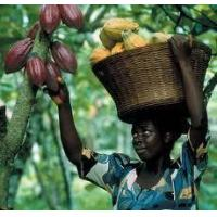 Buy cheap Natural Resources Cocoa from wholesalers