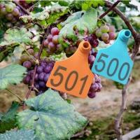 medium size TPU vineyard special usage of female ear tags only