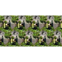Buy cheap Over 75 Corobuff Designs Grape Vine & Wine - Product #1384 from wholesalers