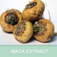 Buy cheap 6012 Ma ka cha new product Good Quality Ginseng Maca Tea from wholesalers
