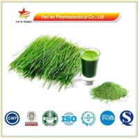 Buy cheap Pure Natural Wheatgrass Powder /wheatgrass Extract from wholesalers