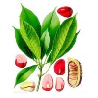 Buy cheap 100% Natural Cola Extract/Cola Powder product