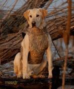 Buy cheap AVERY GREENHEAD GEAR GHG BOATER'S DOG PARKA VEST KW-1 CAMO M MEDIUM 03119 NEW! from wholesalers
