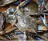 Buy cheap Zhoushan swimming crab product