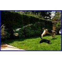 Buy cheap Scarecrow Motion Activated Sprinkler CategoryPest Deterrents from wholesalers