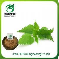Nettle Extract, Factory Supply High Quality Stinging Nettle Supplement, Wholesale Nettle Powder