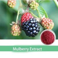 Buy cheap Kosher GMP certified mulberry leaf powder extract from wholesalers