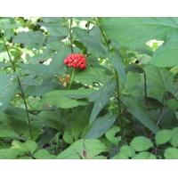 Buy cheap Panax Ginseng Leaves Extract(ginseng Leaf Extract ) from wholesalers