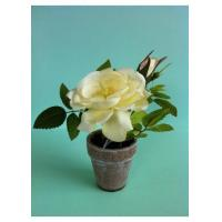 Buy cheap Artificial Potted Rose Flower - Cream from wholesalers
