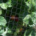 Buy cheap Strawberry Protective Planting Cage Net from wholesalers
