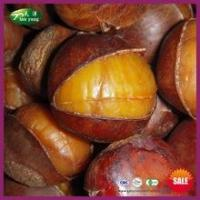 Buy cheap Sell Natural Frozen Roasted Ringent Chestnut with Shell product