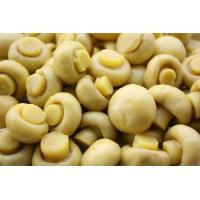 Buy cheap whole mushroom from wholesalers