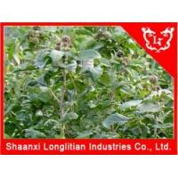 Buy cheap Immunity Enhancers Best Siberian ginseng extract Seller from wholesalers