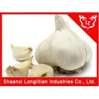 Buy cheap Immunity Enhancers Garlic extract Wholesale from wholesalers
