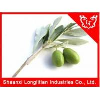Buy cheap Immunity Enhancers China Olive leaf extract Factory product
