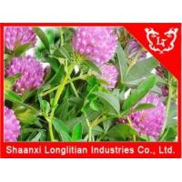 Buy cheap Estrogen Hormone Supplement Red clover extract Manufacturer from wholesalers