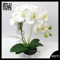 Buy cheap 18 flower heads wishful barbadoslily rose-M-XP018 from wholesalers