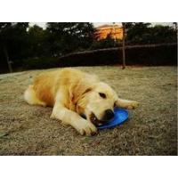 125g pet dog plastic frisbee